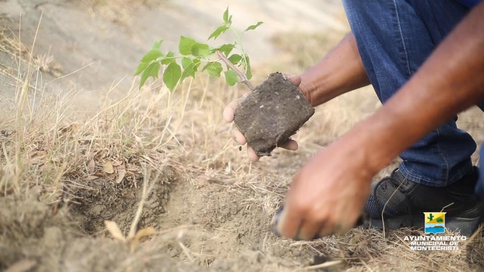 La Alcaldía de Montecristi con el apoyo de la DGDF planta árboles en parque profesor Juan Bosch